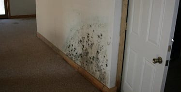 Looking for a Reputable Miami Mold Specialist?