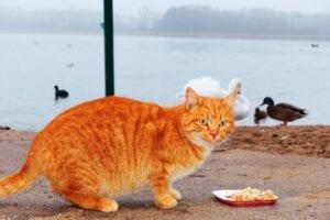 cat-with ducks