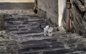 feral cat in street